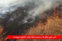 سریال آتش سوزی این بار در جنگلهای «کوشک» شهرستان بویراحمد