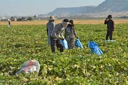 کنترل آبیاری مزارع برای ۸ محصول کشاورزی تبیین شد