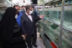 ۴ هزار تن انواع ماهی در استان قزوین تولید میشود