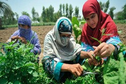 FAO calls for more innovative policies in Asia-Pacific to ensure food security, nutrition in the wake of COVID-19