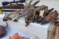 شکارچیان بیرحم در شرق استان سمنان دستگیر شدند/ کشف لاشه شکار