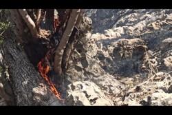 تصاویری از زبانههای آتش در قلب درختان بویراحمد