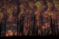 کشف آتش سوزی در جنگلها با حسگرهای بدون نیاز به شارژ