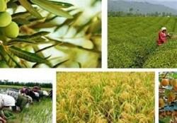 خسارات کرونا به مشاغل بخش کشاورزی/درخواست تسهیلات ۲۰ هزارمیلیارد ریالی