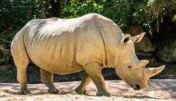 حیوانات باغ وحش آمنویل فرانسه