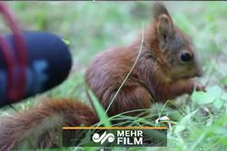 صدای شنیدنی از غذا خوردن سنجاب