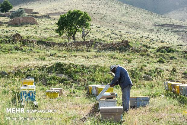 Iranian honey beekeeping industry