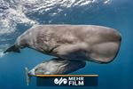 نجات نهنگ عنبر از تور ماهیگیری در سواحل ایتالیا