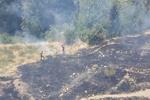 آتش سوزی در پوشش گیاهی منتهی به جنگل های سردشت