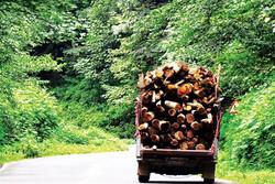 روستائیان از قطع درختان درآمد کسب میکنند/ گونههای بومی در شرف نابودی