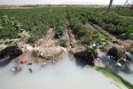 ردپای فاضلاب تا سفرههای مردم/ مزارع سبزی «بروجرد» با فاضلاب آبیاری میشود