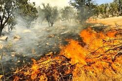 حریق  در جنگلهای منطقه «بلوط بلند» چهارمحالوبختیاری شعله ور شد