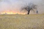 ۴۰۰ اصله درخت در ایوان طعمه حریق شد