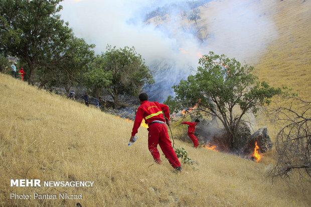 """حريق في غابات البلوط بمنطقة """"جهار محل وبختياري"""""""