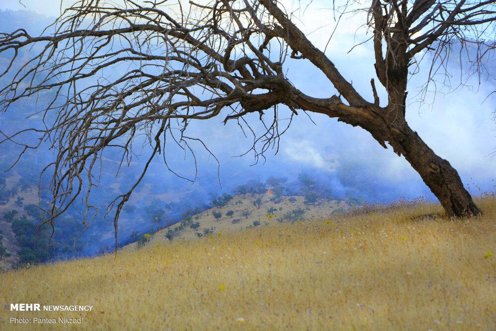 آتش سوزی در جنگل های بلوط بلند چهارمحال و بختیاری