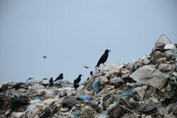 روزانه ۴۰۰ تن زباله در شهر همدان تولید می شود