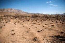 غرب استان قزوین از کم آبی رنج میبرد