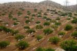 ۳۰ هزار هکتار اراضی شیب دار کشور جنگل کاری میشود