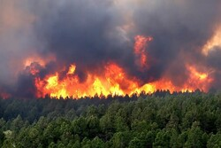 VIDEO: Wildfire rages Colorado forests in US