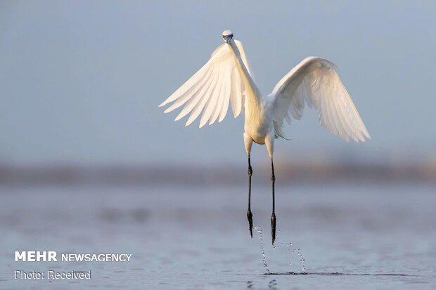 2020 Audubon Fotoğraf Yarışması
