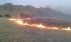 آتش در کوههای دشتی مهار شد
