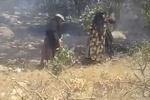 زنان با شاخه درختان به نبرد شعله های آتش در بویراحمد رفتند