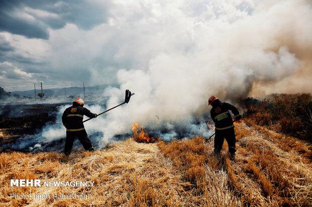 مهار آتش سوزی در مزارع جو اطراف قاسم آباد همدان