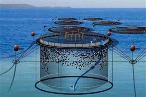 تحقیقات برای تولید ماهی در قفس ادامه دارد