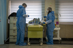 بیماری «طاعون خیارکی» اتفاق جدیدی نیست/زمان شیوع آنفلوانزا