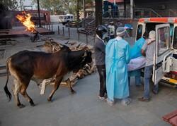 Hindistan'da günlük ölüm sayısı en yüksek seviyede