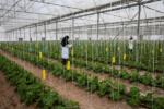 حمایت کمیسیون کشاورزی مجلس از دستاوردهای دانشبنیان