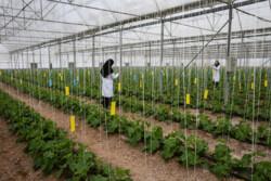 دستورالعمل صدور مجوز فعالیت گردشگری کشاورزی ابلاغ شد