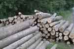 محموله چوب جنگلی قاچاق در شهرستان خانمیرزا کشف شد