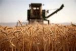 ۱۳ هزار تن گندم از کشاورزان خراسانجنوبی خریداری شد