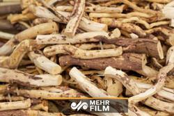 گلایه های تولیدکننده روستایی ورامینی از افزایش قیمت مواد اولیه