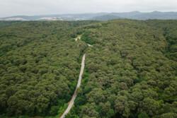 ۴۰ هزار هکتار جنگل احیا و غنی سازی میشود