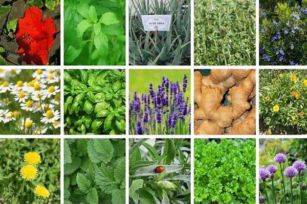 گیاهان دارویی ظرفیتی برای ایجاد اشتغال در لرستان
