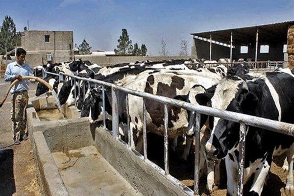 تولید سالانه ۴۴۰ هزار تن محصولات دامی در گیلان