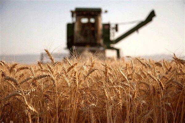 رامشیر رکورددار خرید گندم در خوزستان شد