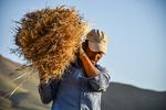 کودهای داخلی جایگزین فسفاته و پتاسه شد/ فروش گندم کشاورزان در بازار آزاد