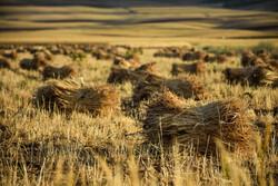 کشاورزی خوزستان با یک چالش و بحران اساسی مواجه است