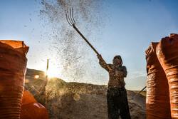 انتقاد از قیمت تعیین شده برای گندم از سوی دولت/ شورای قیمتگذاری نرخ را تعیین کند