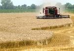 ۴۰ هزار هکتار از مزارع جاجرم رفع تداخل شد