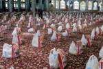 ۱۵۰ هزار بسته معیشتی توسط سپاه استان بوشهر توزیع شد