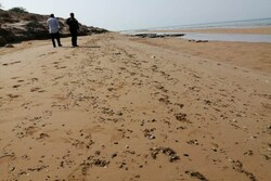 ساحل گناوه به لکههای نفتی آلوده است