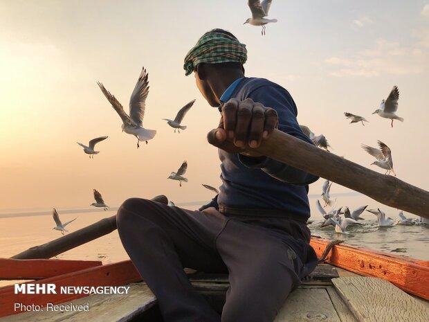 برندگان مسابقه عکاسی با آیفون ۲۰۲۰