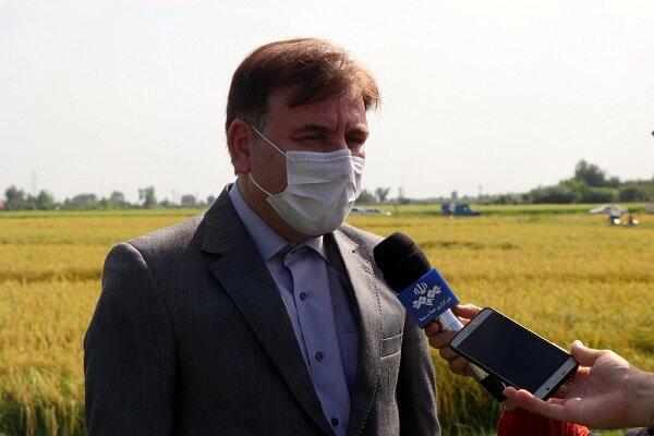 ضرورت تشدید نظارت برای جلوگیری از واردات برنج در زمان برداشت