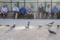 روزشمار هفته گرامیداشت و تکریم منزلت سالمندان اعلام شد/پویش احوالپرسی از سالمندان راه می افتد