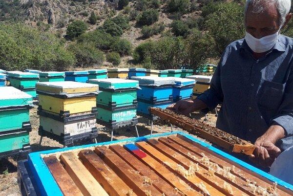 تولید ۳ برابری عسل با روش اصلاح نژاد ملکه در جاجرم