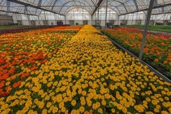 Iran exports over $5mn flowers, plants in Q1: IRICA spox